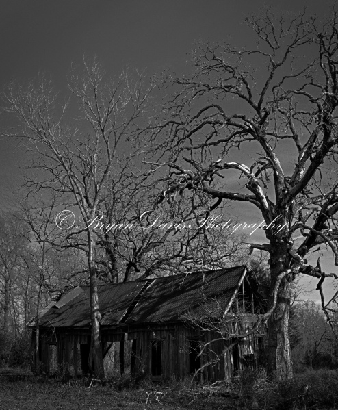 Old barn in trees b&w copyright
