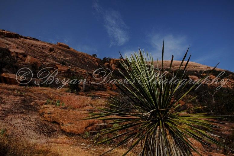 Enchanted-Park-Palm-web