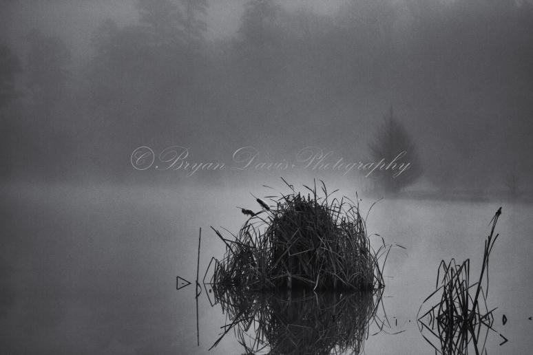 Fog-on-lake-web