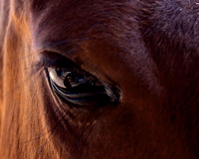 HorseEye1web