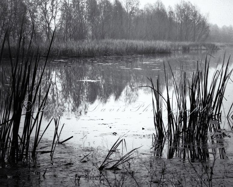 Early-Morning-Lake-web