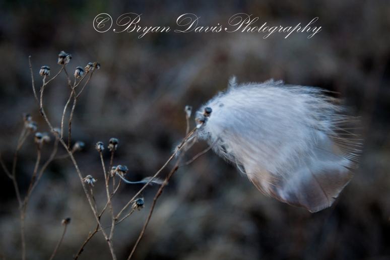 Hawk-feather2
