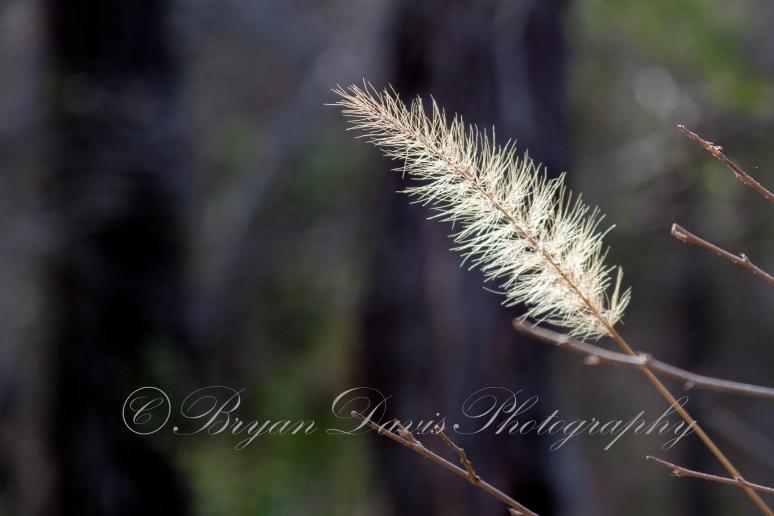 Seed Head web