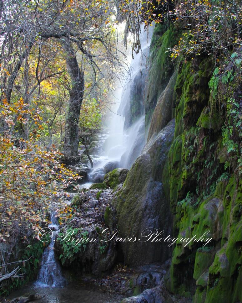 Gorman-Falls