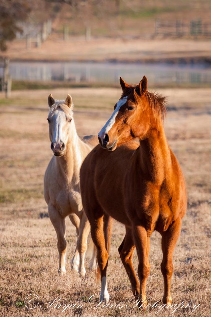 Horses web