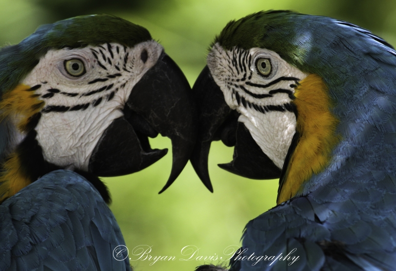 macaws-web