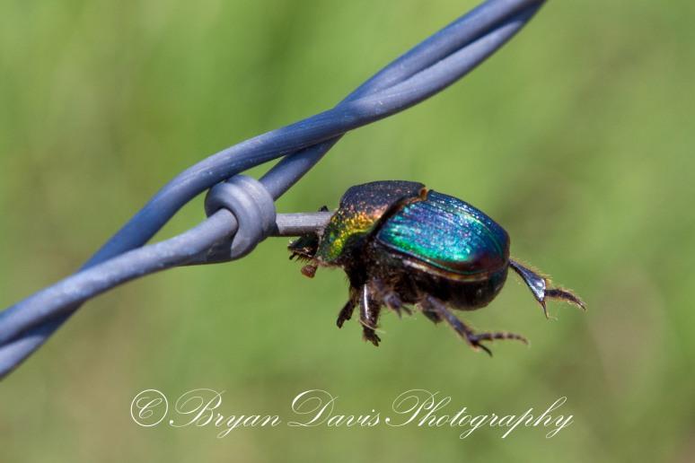 June-Bug-web