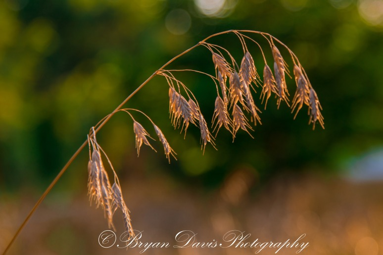 Seeds-web