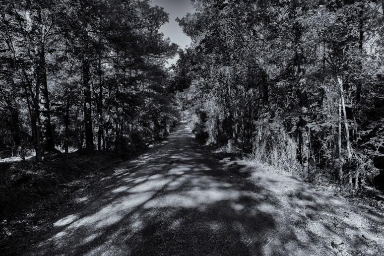 A-Dark-Road-web