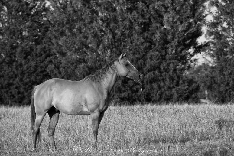 Horse-1-web