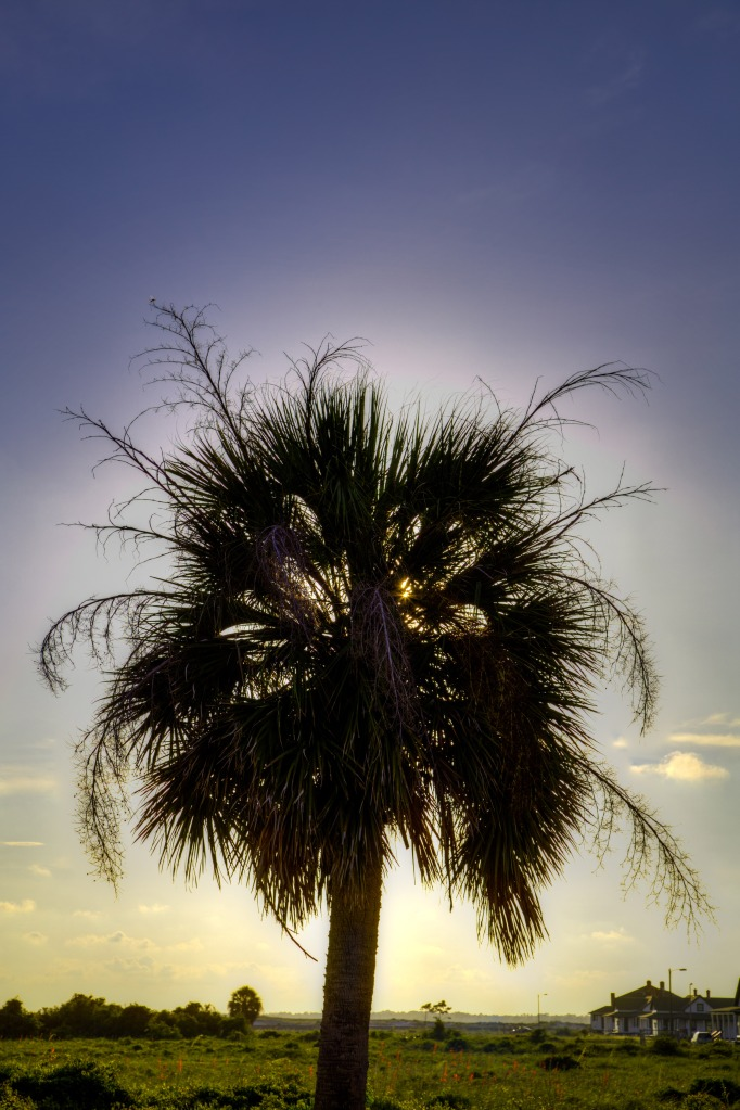 Palm-Tree-2-web