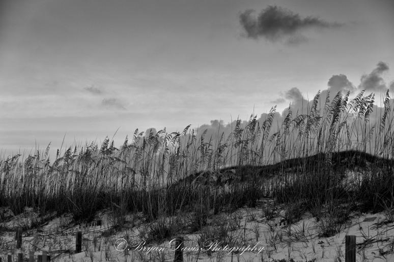 Sand-Dunes-web