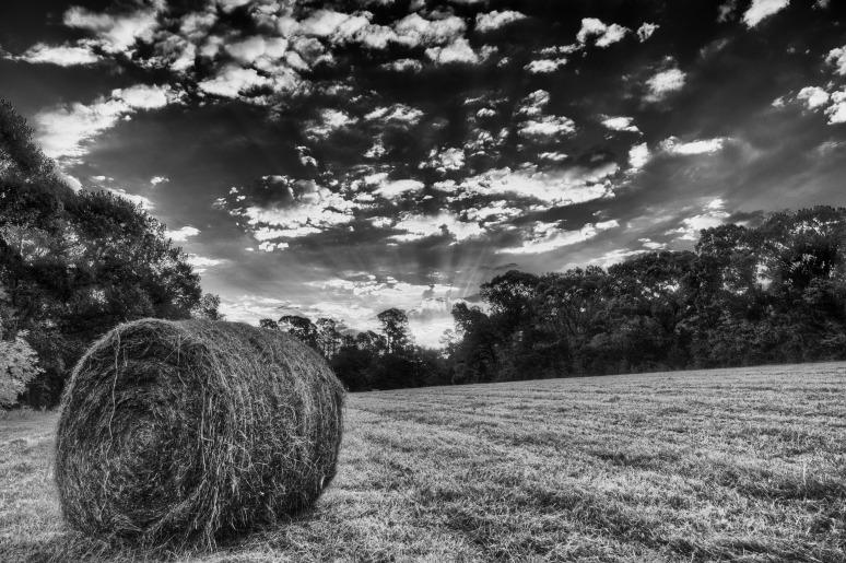 Back-Pasture-Hay-Bale-web