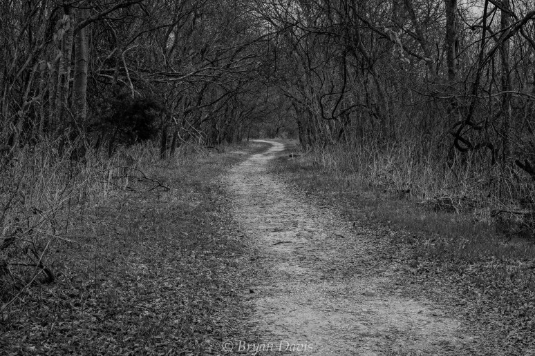 Path less travelled-2