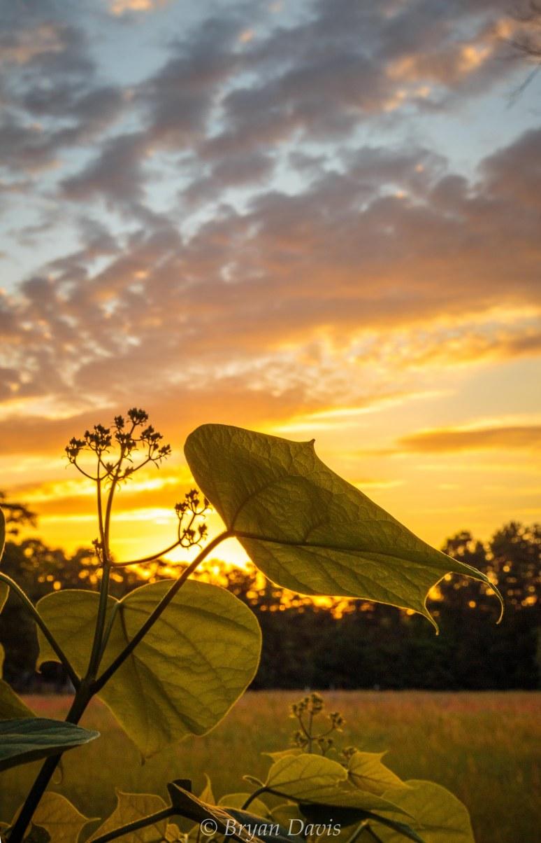 Cataba Sunset