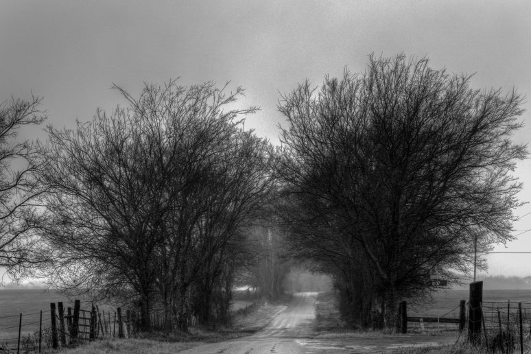 foggy-backroad-1-of-1